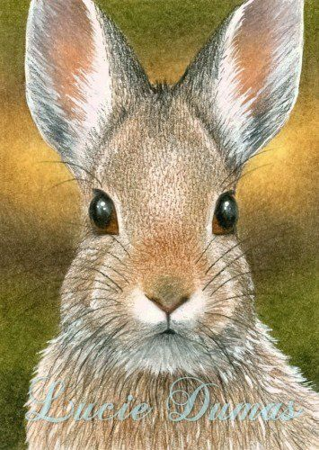 Pin By Ellen Bounds On Bunny Art How To Draw And Paint