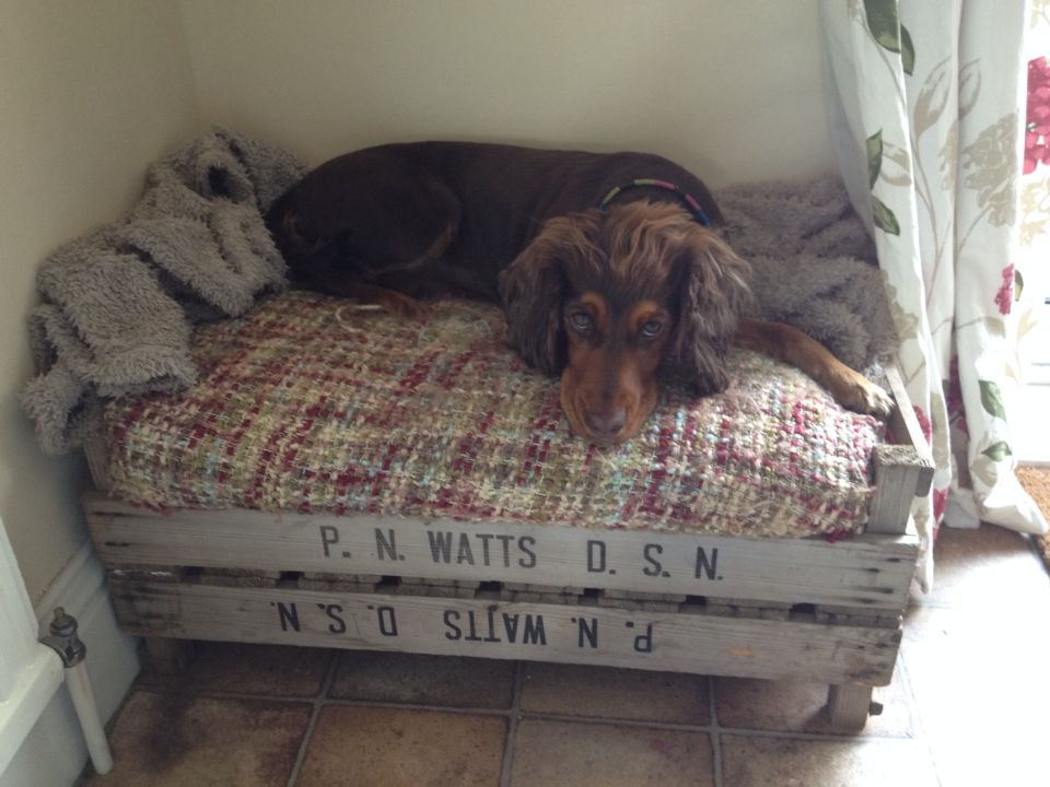 Homemade Made Shabby Chic Dog Bed! More More
