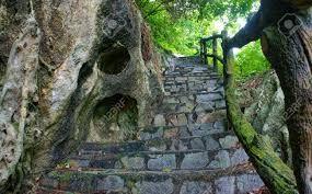 Afbeeldingsresultaat voor trees through stone rock