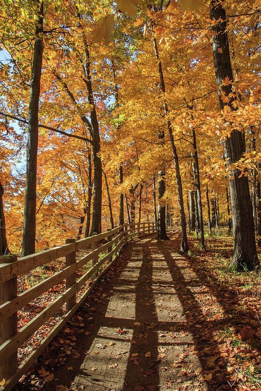 Fort Hill Trail II Art Print by Lon Dittrick #falltrees