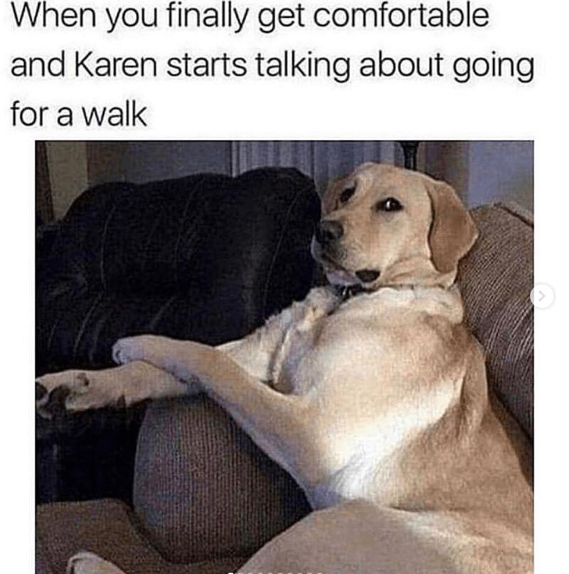 Treat Yourself With These 35 Fresh Hot Doggo Memes Funny Animal Memes Funny Dog Memes Most Hilarious Memes