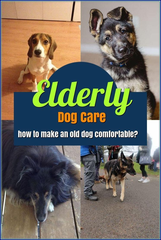 The Best Options For Elderly Dog Care Elderly Dog Care Elderly