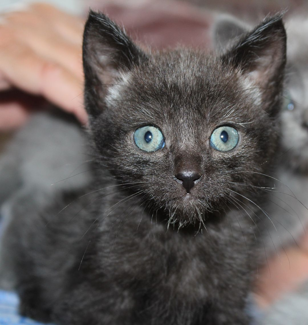 She'll be ready for adoption towards the end of Sept
