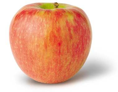 Minnesota designated the Honeycrisp™ apple (Malus pumila