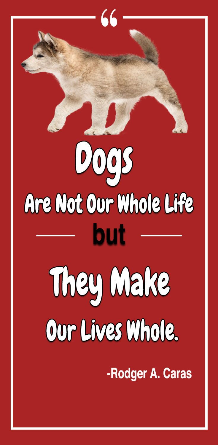 25 cute quotes to your dog from the heart Dog quotes