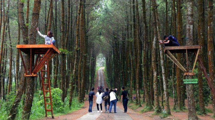 Kebun Pinus Cikole