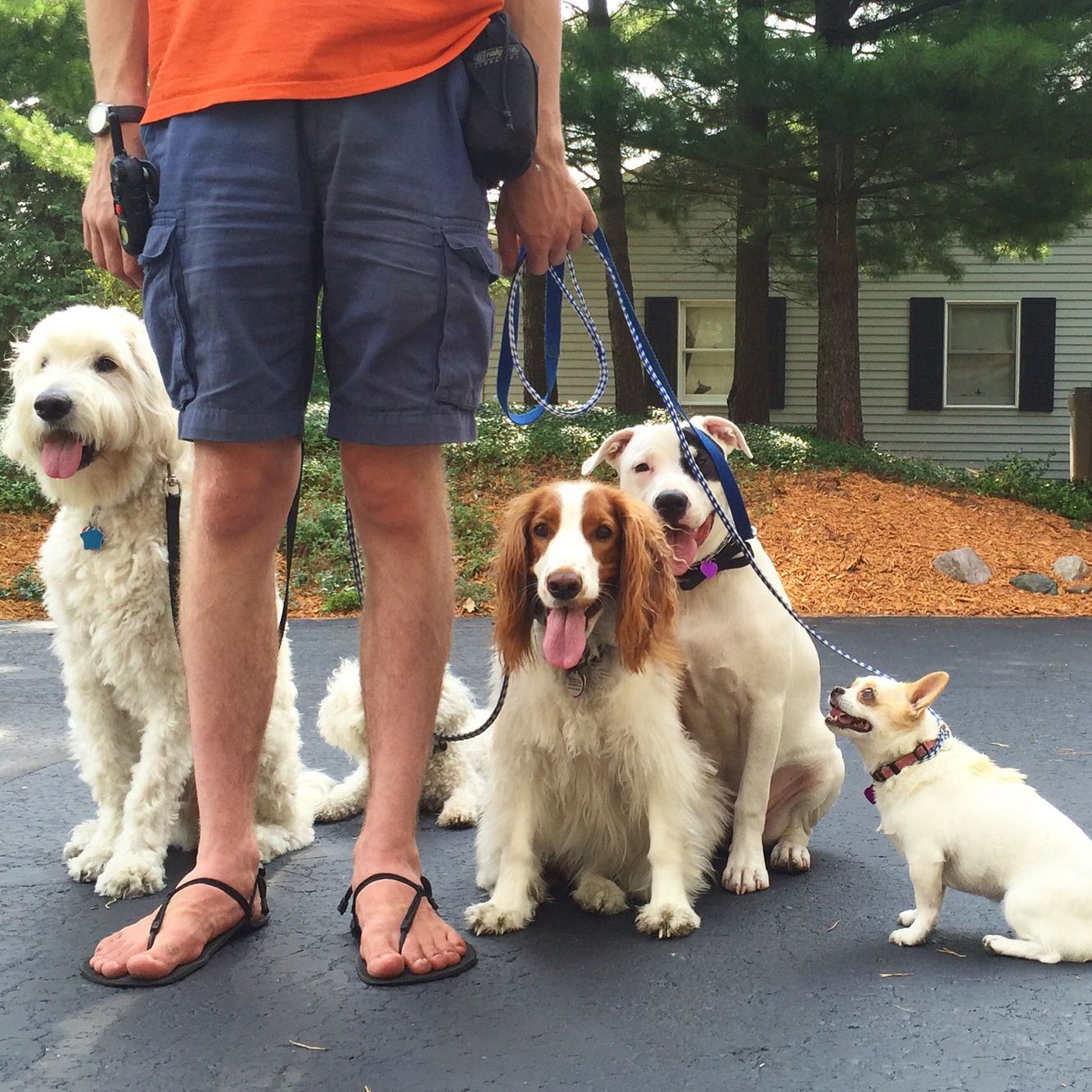 Discussion on this topic: How to DogSit when You Have a , how-to-dogsit-when-you-have-a/