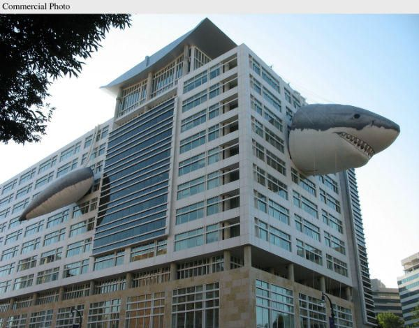 Discovery Channel building during Shark Week!