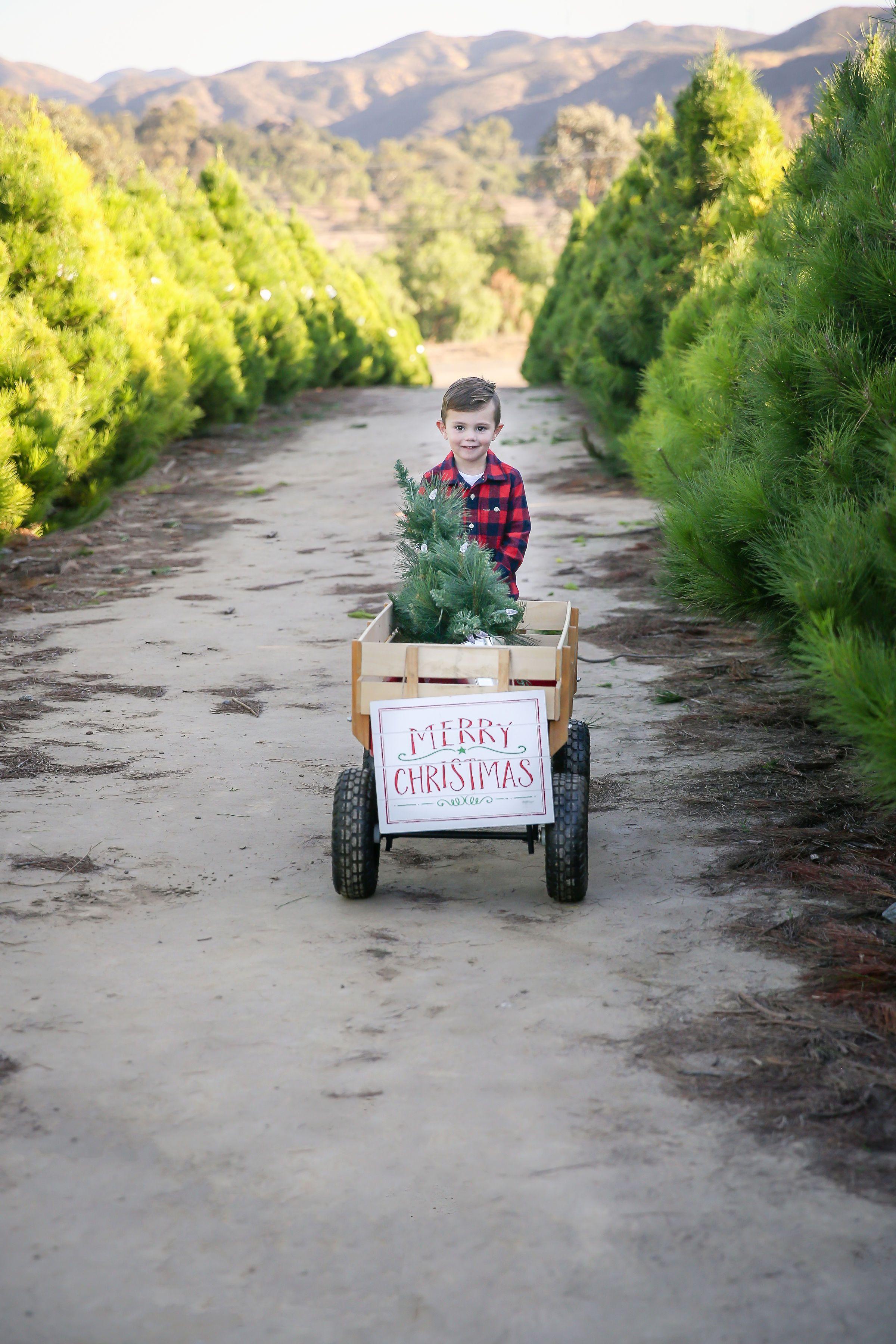 Family Holiday Photos Family Holiday Photos Holiday Photos Christmas Tree Farm