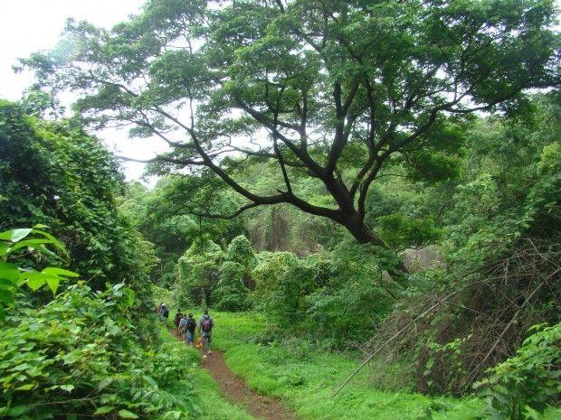 foresta Maharastra, India