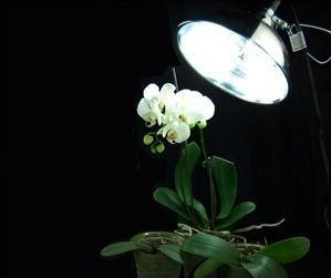 Growing Orchids Under Grow Lights #growingorchids Growing Orchids Under Grow Lights #growingorchids