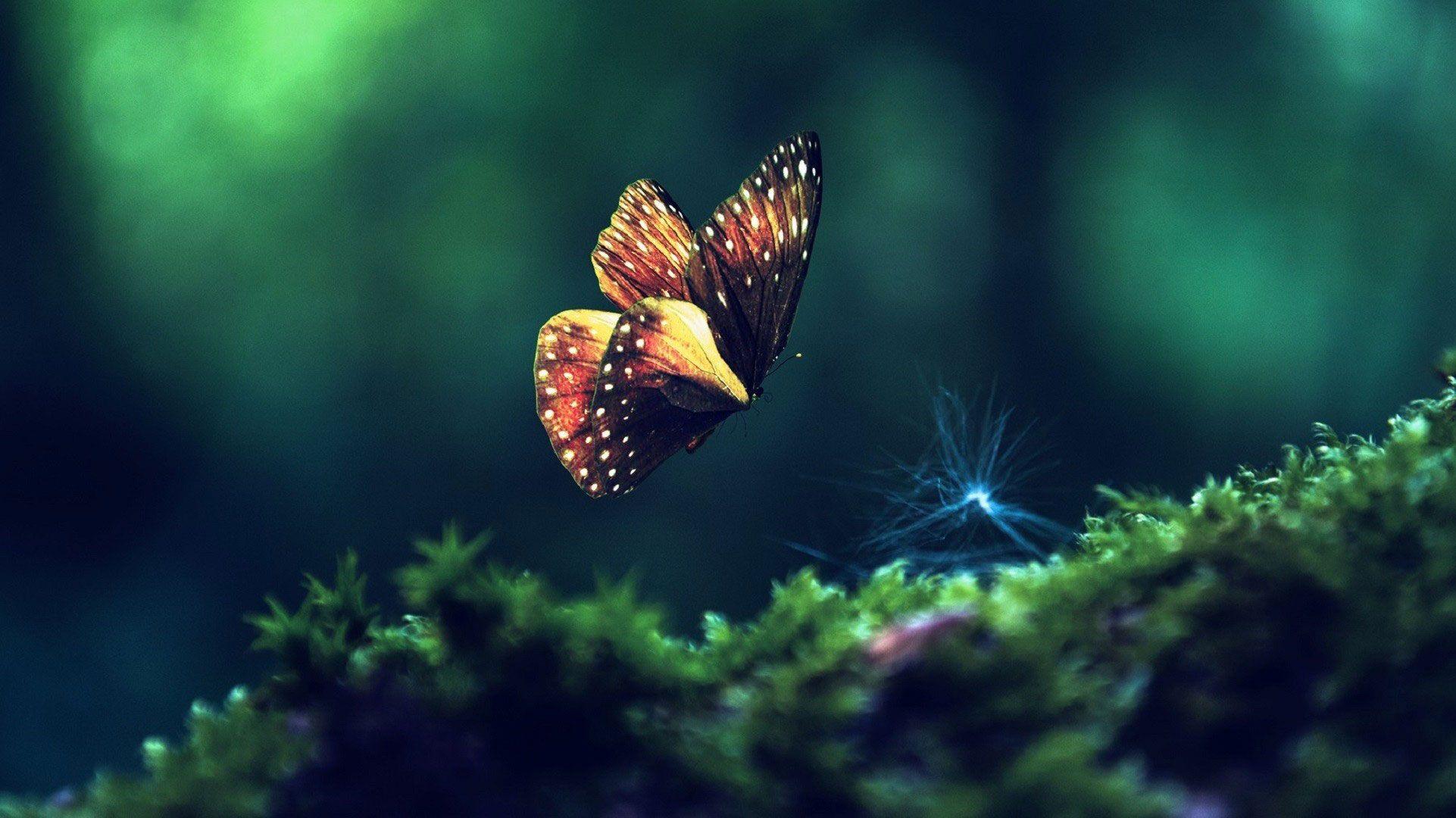 Beautiful Butterfly Wallpaper Hd Butterfly Wallpaper Live Wallpapers Aesthetic Wallpapers