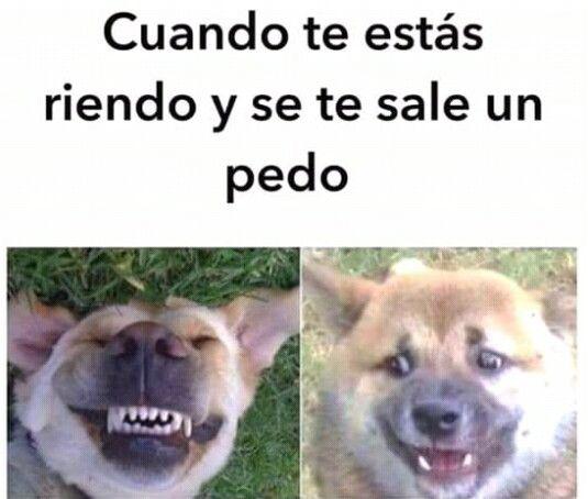 Perro Riendo Meme Imagenes Divertidas De Animales Humor De Perros Mascotas Memes