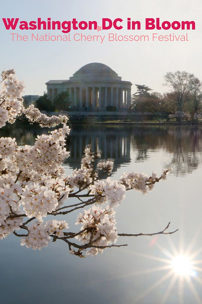 DC in Bloom: National Cherry Blossom Festival 2015