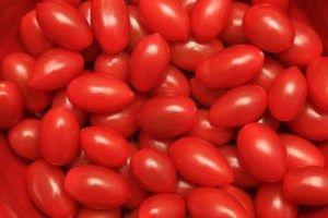 Tomate Fresquinho Sem Agrotóxico na Sua Horta