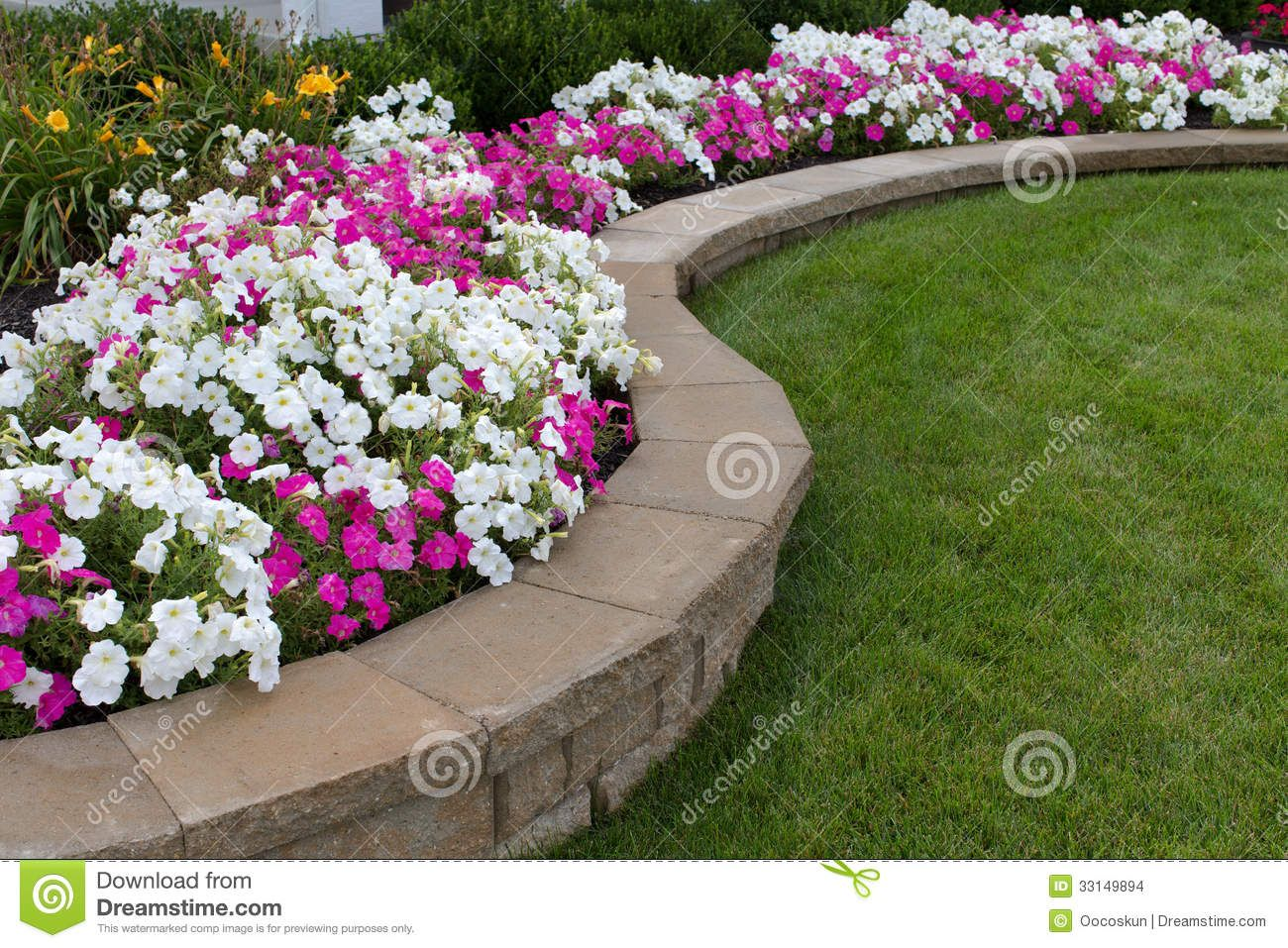 petunia garden bed | peink and white petunias on the flower bed