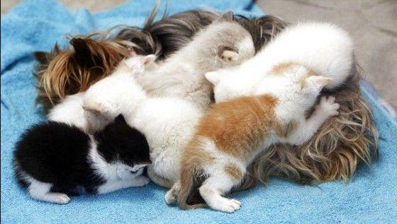 Yorkshire adopteert schattige kittens