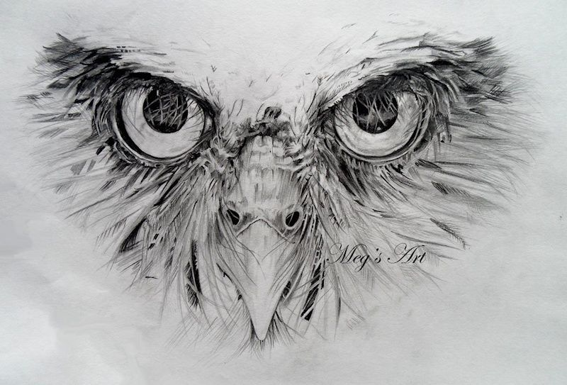 Owl Face pencil drawing (in progress) - Artwork by Megan ...
