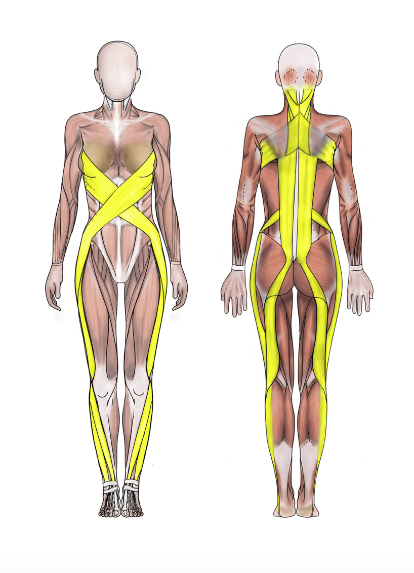spiral-line_ashley-black-guru-fascia-tool-fasciablaster | Anatomy ...