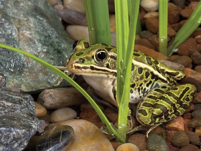 How to Build a Frog Pond in Your Backyard | Backyard, Boys ...