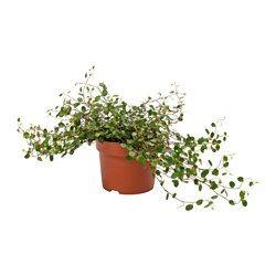zimmerpflanzen topfpflanzen g nstig online kaufen ikea decor pinterest topfpflanzen. Black Bedroom Furniture Sets. Home Design Ideas