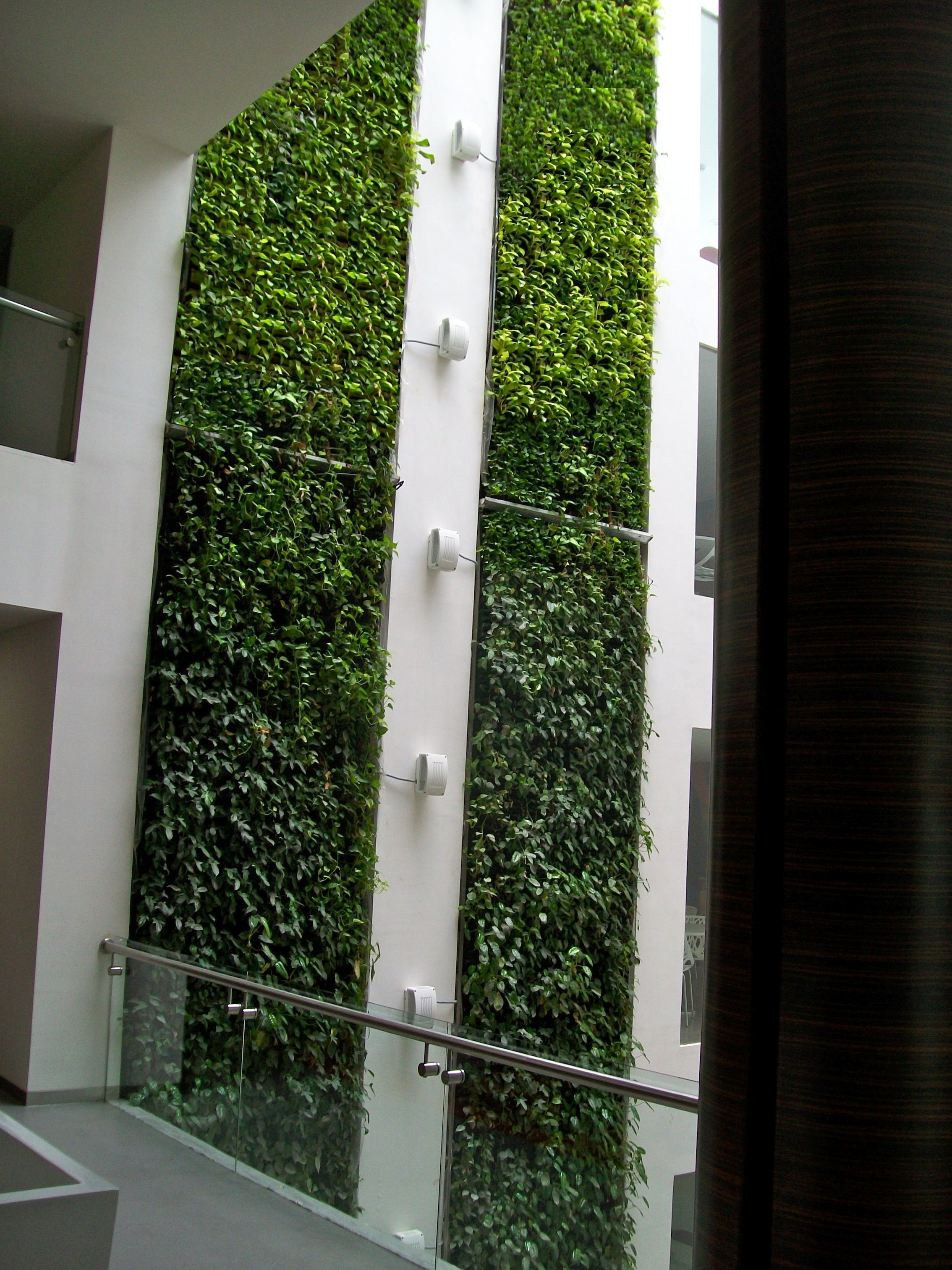 Medium Of Wall Indoor Garden