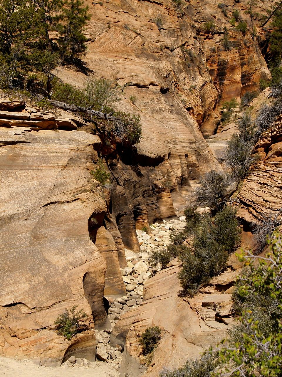 Free Images : geotagged, united states, usa, utah, Zion