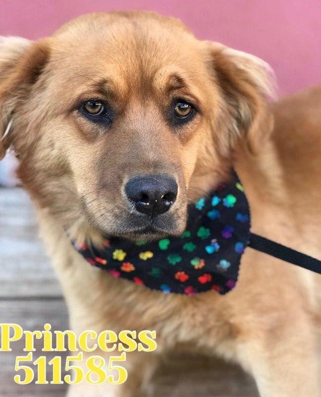 Princess Located In San Antonio Tx Has 3 Days Left To Live Adopt