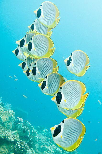 The Ocean Is Wonderful Ocean Creatures Ocean Fishing Ocean Animals