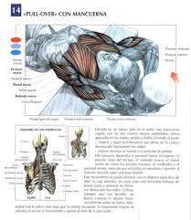 Resultado de imagen de ejercicios de mancuernas