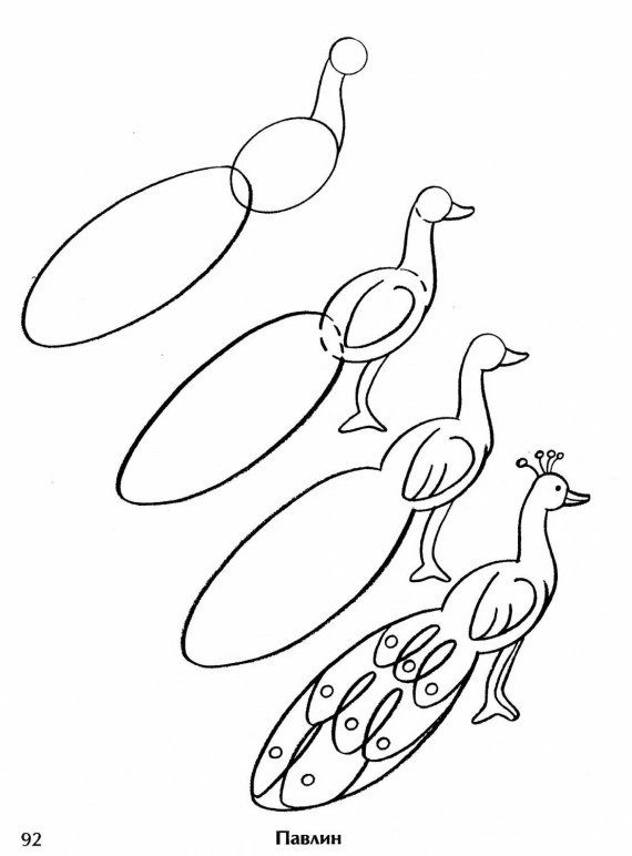 Step By Step Drawing A Peacock Art Craft In 2019 Drawings