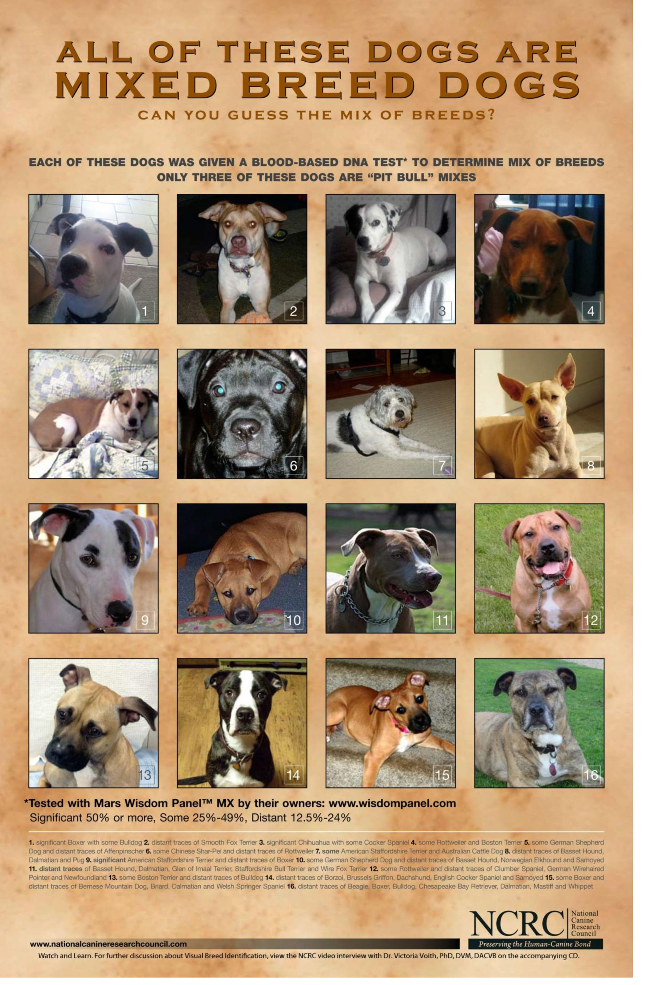 Can you guess their breeds?  Each of these dogs were given a blood-based Dna test to determine mix of breeds.. Only 3 are Pit Bull mixes.  *Please Spay, Neuter & Adopt from shelter/rescue ♥