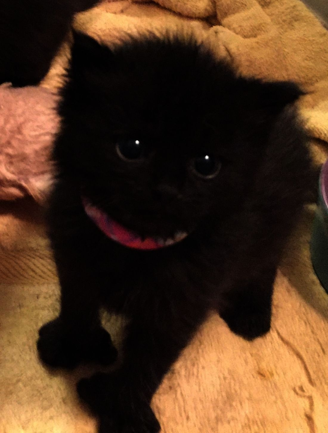 Too Much Catnip Baby Animals Funny Cute Baby Animals Kittens Cutest