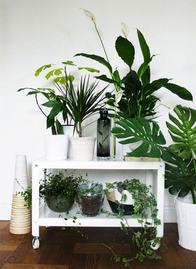 Emejing Plants For Decorating Home Photos - Interior Design Ideas ...
