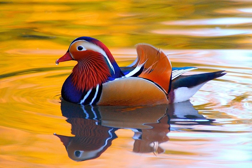 World's 10 Beautiful and colorful Birds