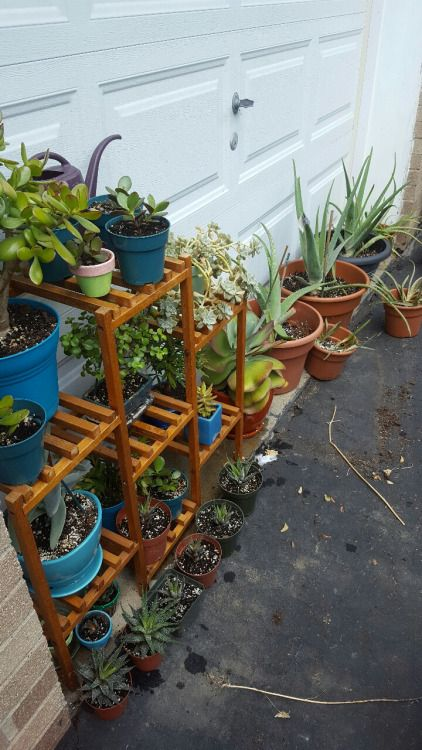 plantanarchy:  Do I have too many plants?   No. There is no such...