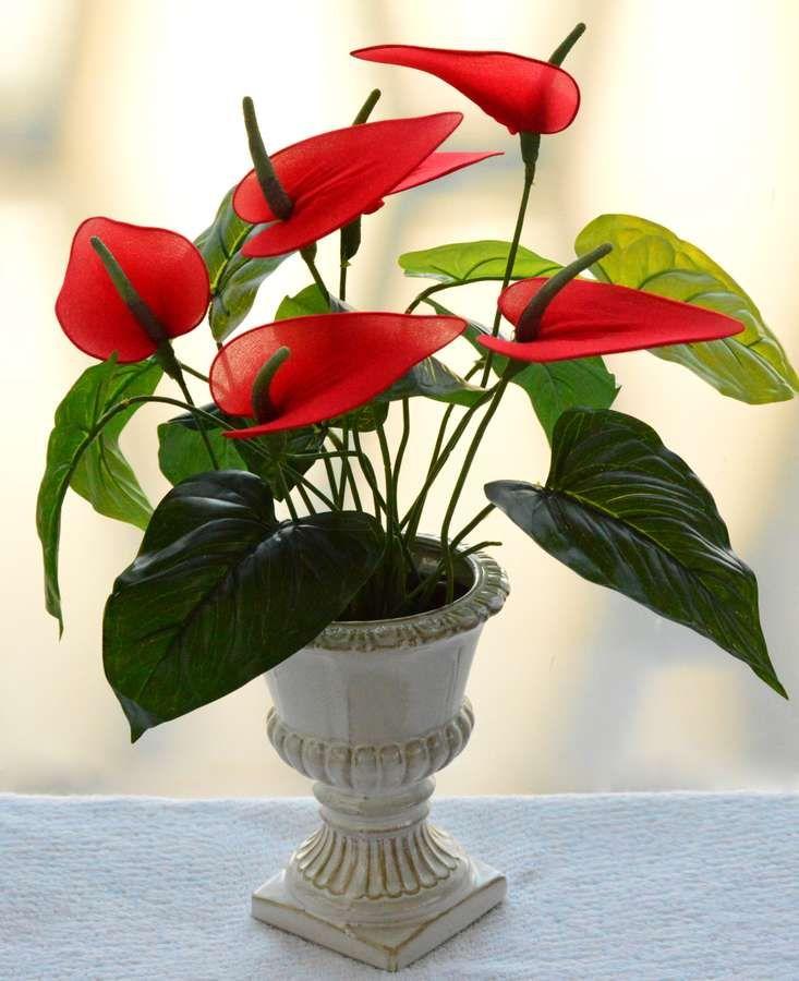 Easy To Grow Beautiful Indoor Plants In Indian Homes Indoor