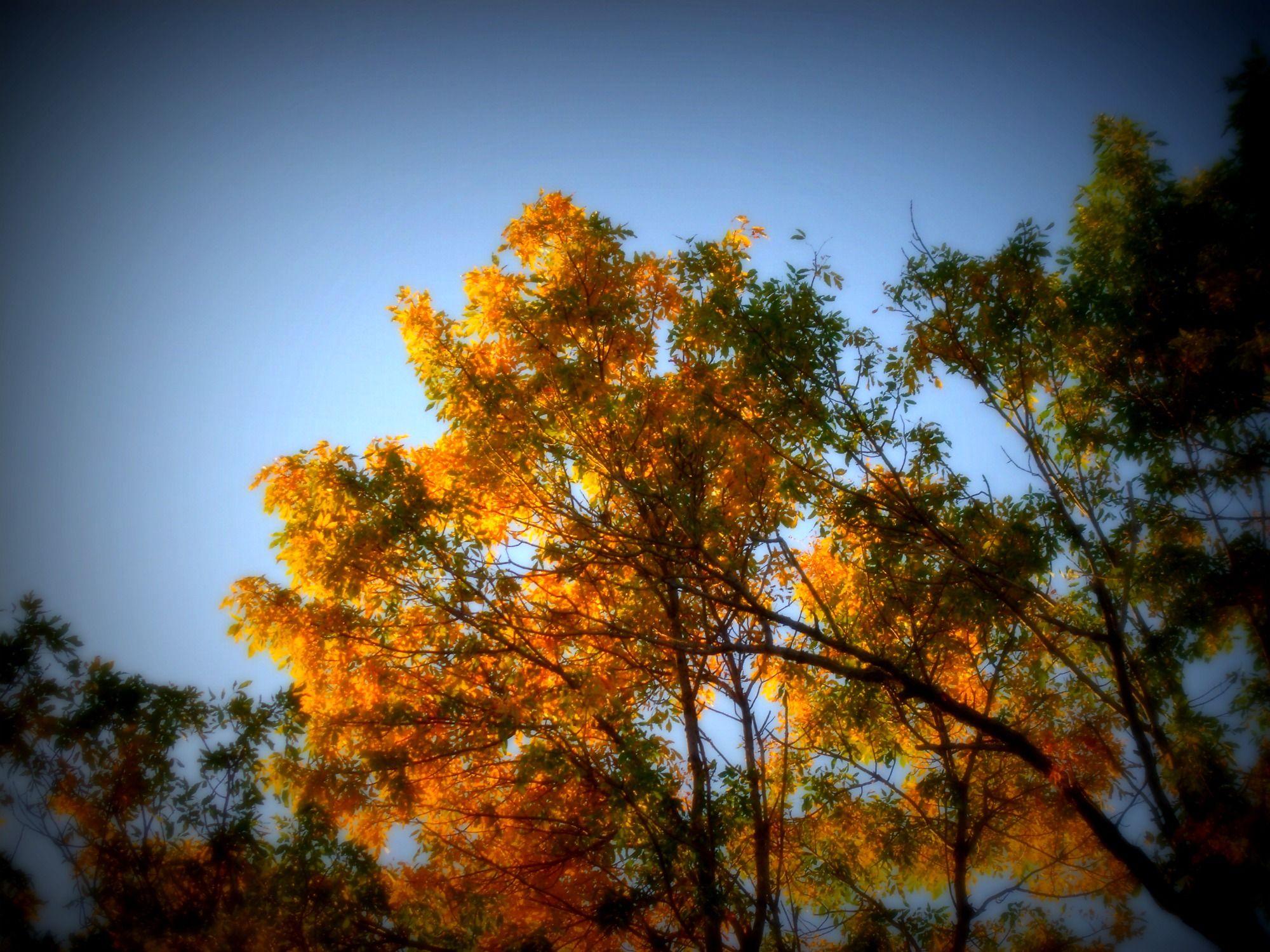 fall tree!