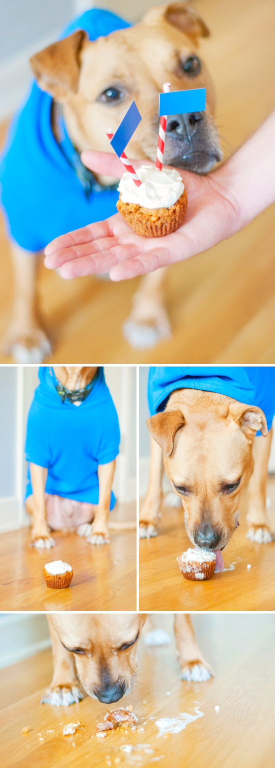Dog-Friendly Cupcakes — Dogs love yogurt, so how about cupcakes with yogurt in them? Via @KD Eustaquio @ Yellow Brick Home