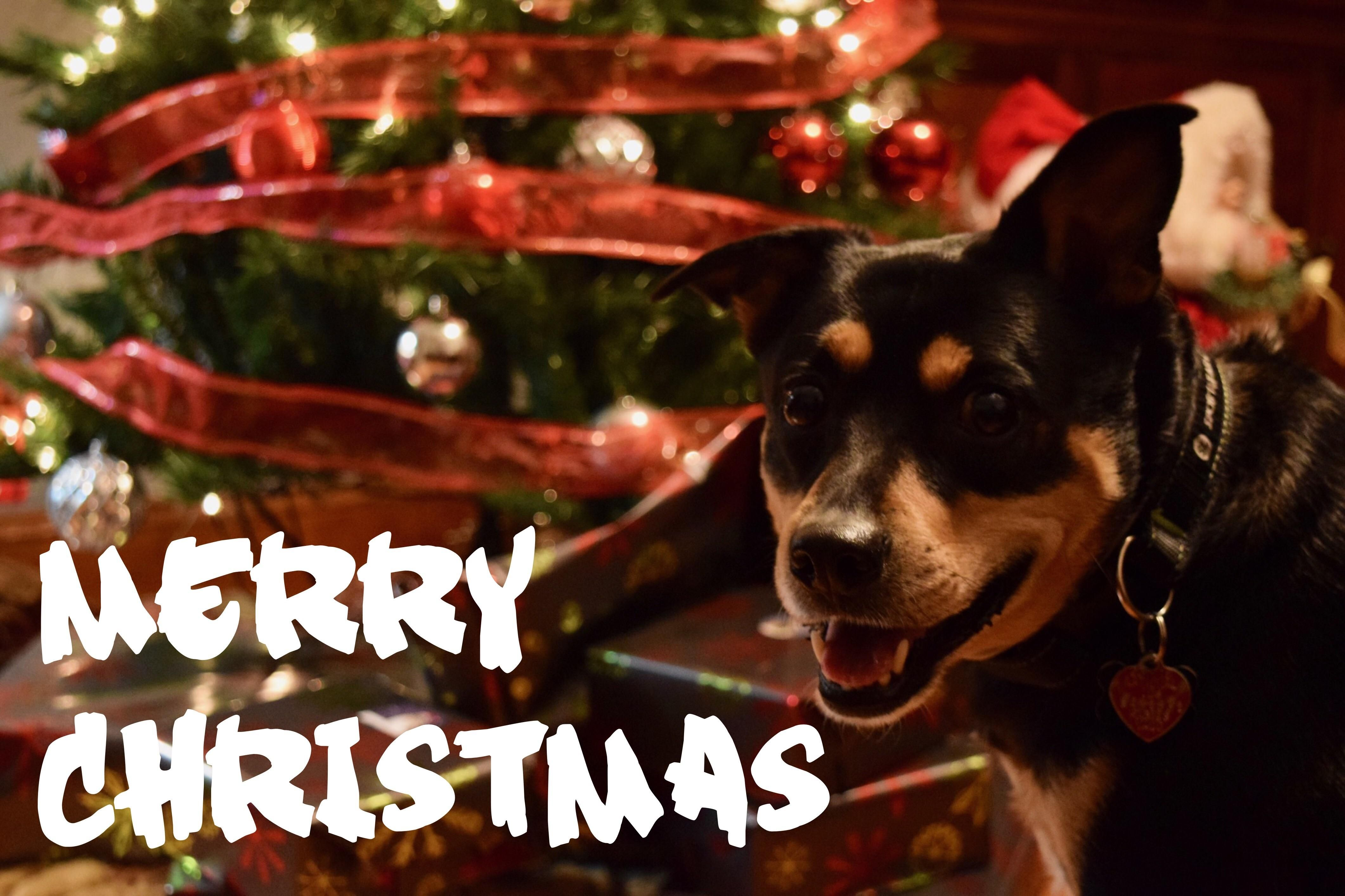 Merry Christmas From Me and Webster!!!