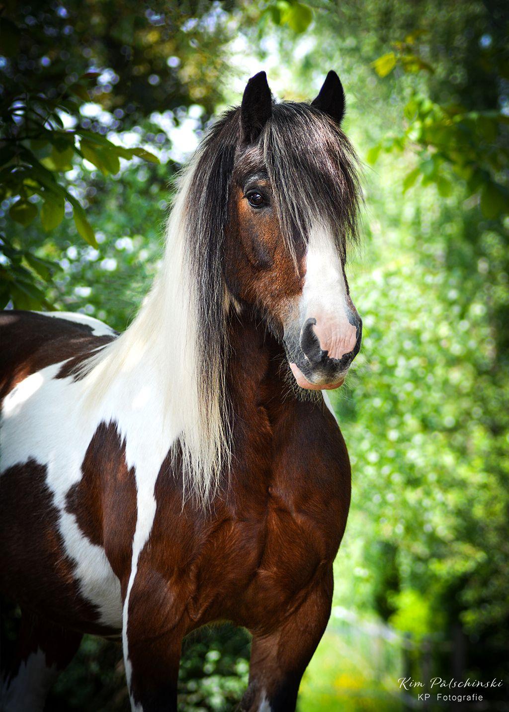 Tinkerliebe Pferde Schone Pferde Pferdebilder
