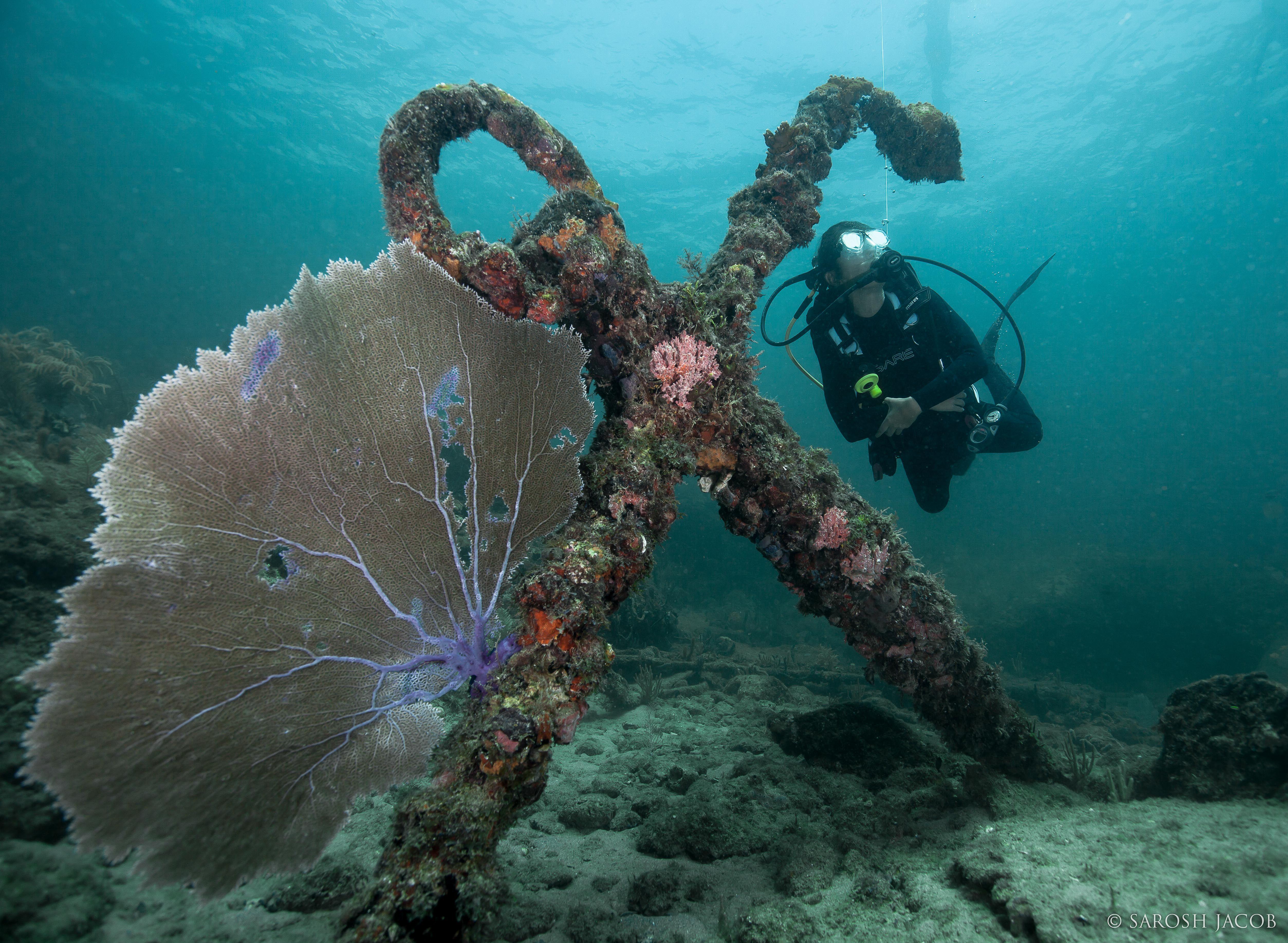 Exploring The Wreck - by: Sarosh Jacob
