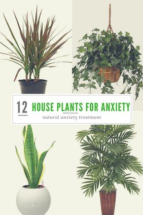 12 Most Powerful House Plants for Anxiety and Stress -   14 plants House healthy ideas