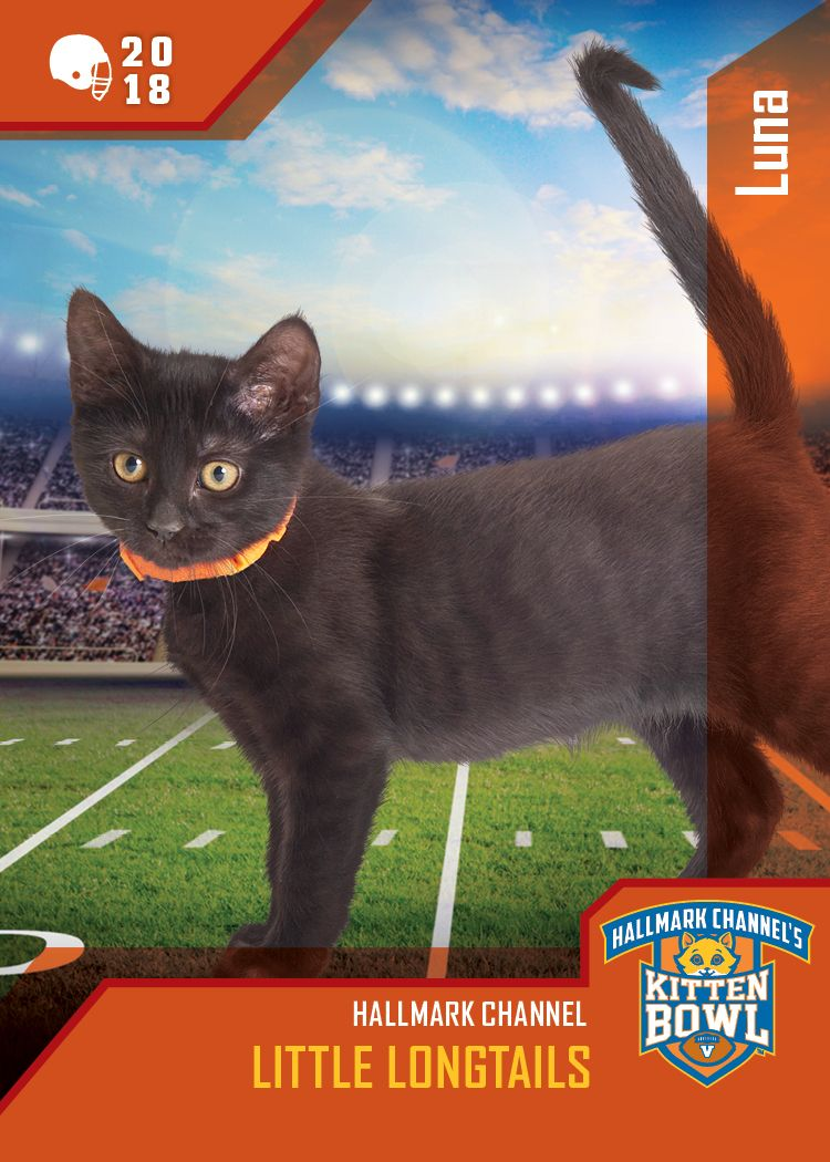 Kitten Bowl V While Luna Might Be The Perfect Cat For Good Witch S Cassie She Belongs To The Little Longtails This Tie Kitten Bowls Hallmark Channel Kitten