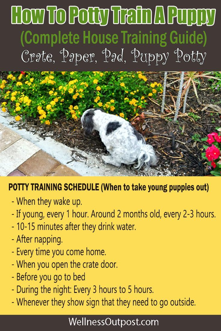 How To Potty Train A Puppy House Training Guide