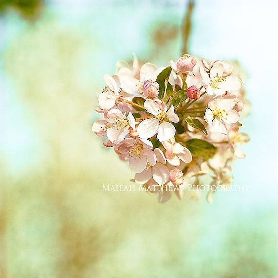Ball of Flower Blossoms Photograph, spring home decor, bright wall ...