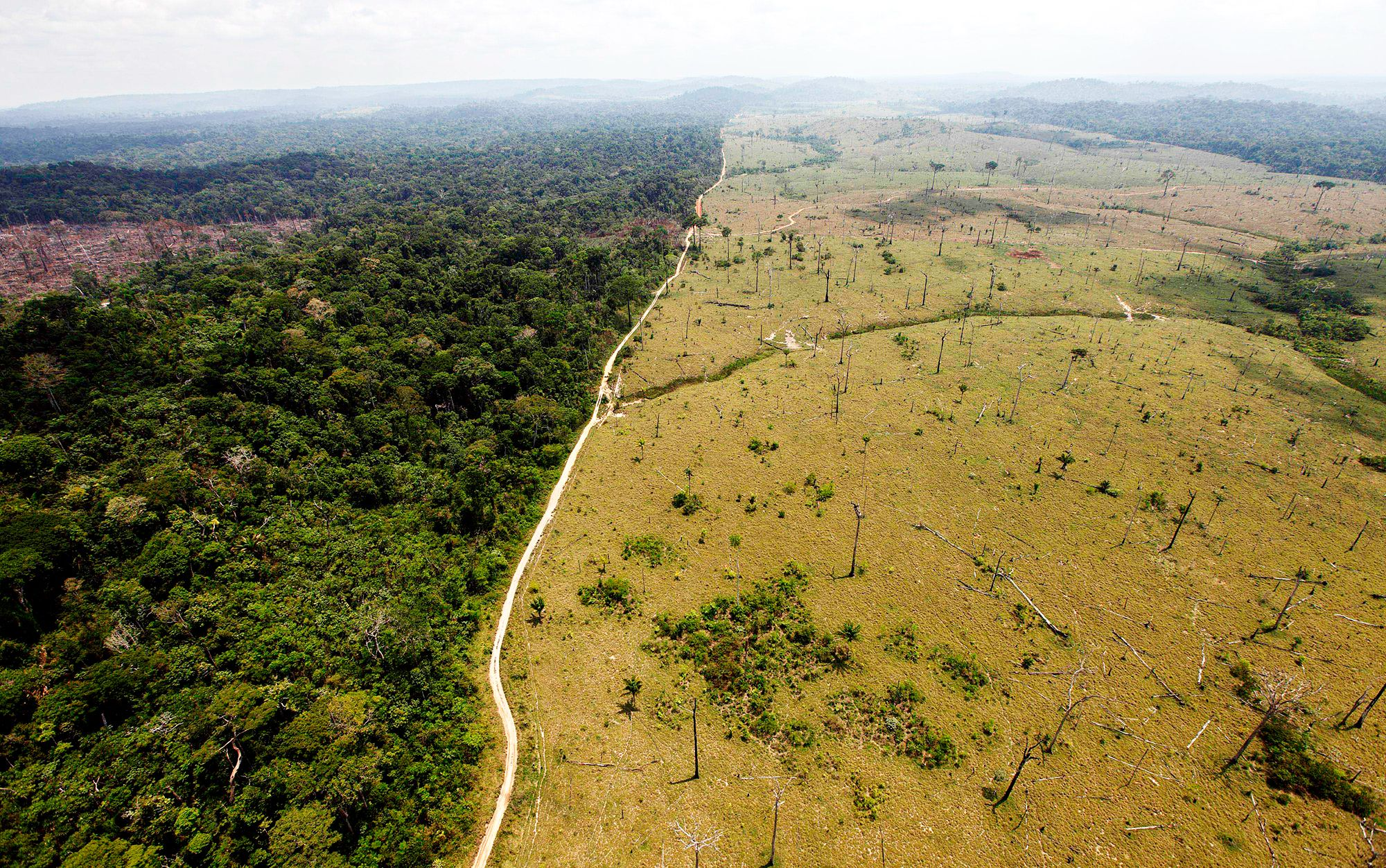 Using Satellites To Stop Deforestation Before It Happens Climate