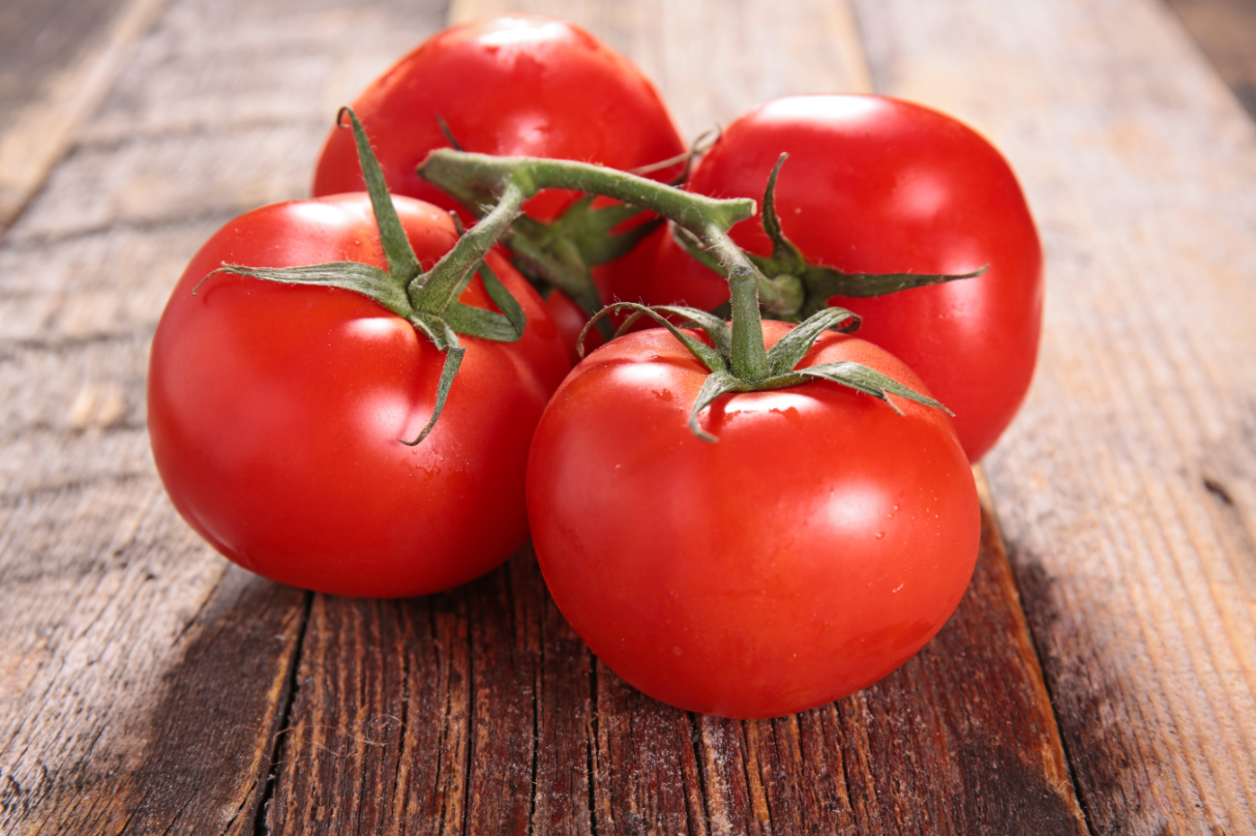 Looking for the perfect multi-purpose tomato for your garden? You've found  it with Mountain Merit. The delicious round fruit…   Tomato, Vegetables,  Organic tomatoes