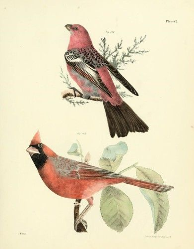 n520_w1150 | Natural history of New York Albany,D. Appleton … | Flickr