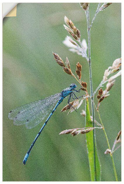 Photo of Buy Artland Premium Wall Film »Andrea Potratz: Little Dragonfly« online OTTO
